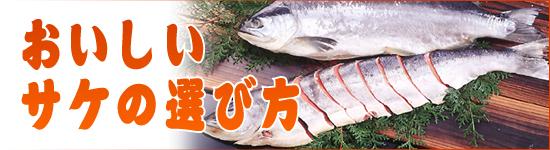 おいしい鮭の選び方